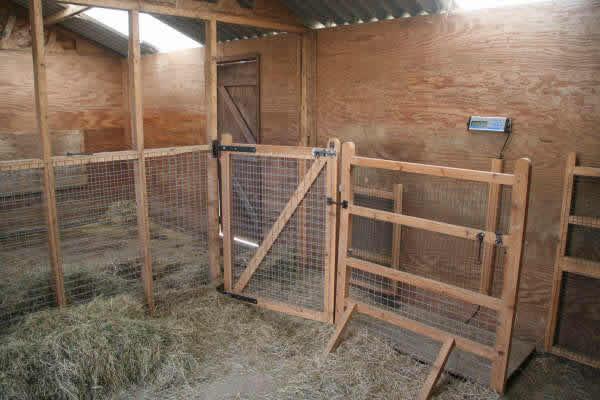 Alpaca facilities at Spring Farm, Sussex