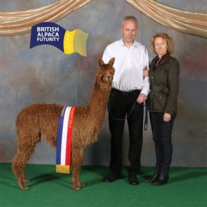 Alpacas for sale including show winning alpacas