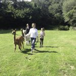 Alpaca open day and workshop