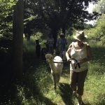 Glorious weather in Sussex - perfect for walking alpacas!