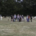 The textile art group meets spring farm alpacas