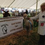 Spring Farm Alpacas at the Romsey Show 2014