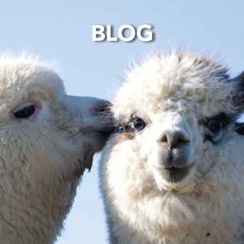 Springfarm Alpacas - Blog