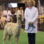 Showing alpacas at the BAS National