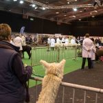 Watching the judging at the BAS National