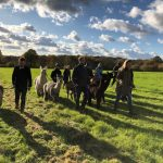Perfect Christmas Presents – alpaca walking vouchers!