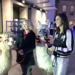 julia Bradbury with a llama and alpaca