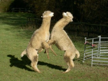 Two to tango - or should that be foxtrot?