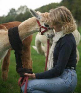 wearing_alpaca1
