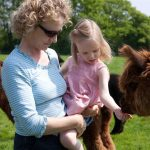 Hand feeding alpacas in Sussex
