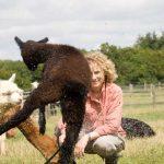 Low flying alpacas - across sussex, surrey and kent