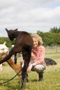 Low flying alpacas - across sussex, surrey and kent
