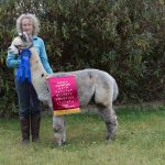 Lord Percy – reserve champion grey male at Showtime