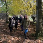 Autumn walk with alpacas
