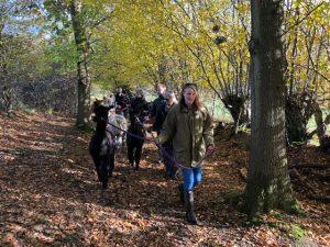 Autumn walk with alpacas