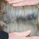 Gunsmith's progeny's fleece