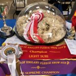 Supreme champion fleece at the Heart of England 2018 fleece show