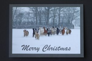 Alpaca card - merry christmas