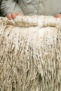 Suri white stud male fleece