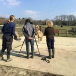 Filming with alpacas
