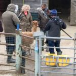 Filming down on the farm with alpacas
