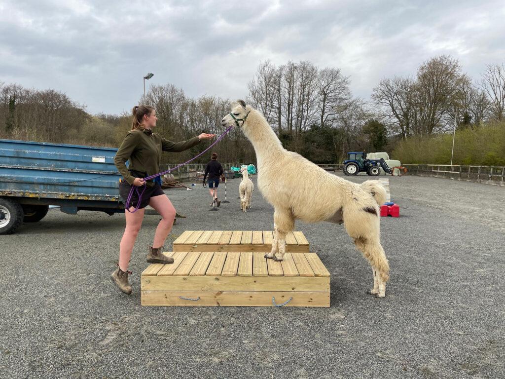 Merlin on the mounting blocks