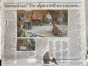 Telegraph article on meditating with alpacas