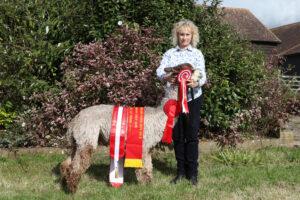 Springfarm Amethyst - Champion Grey Suri Fleece at Heart of England 2021 Fleece Show